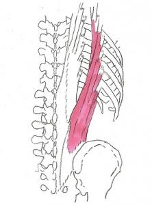 腰腸肋筋2