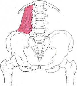 腰方形筋1