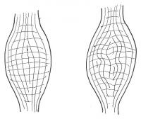 筋膜の歪みblog